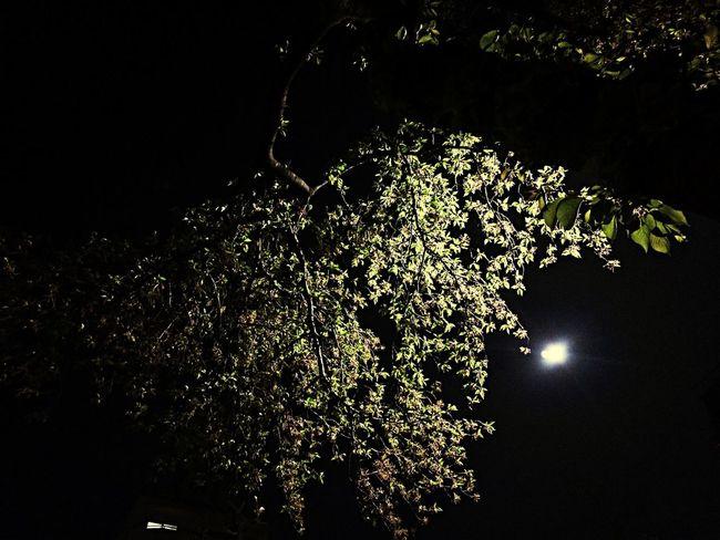 満月と葉桜