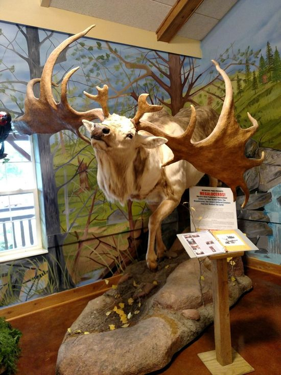 Megaloceros Extinct Live And Learn  The Past Recreate Extinct Species Save The Earth Cherishlife