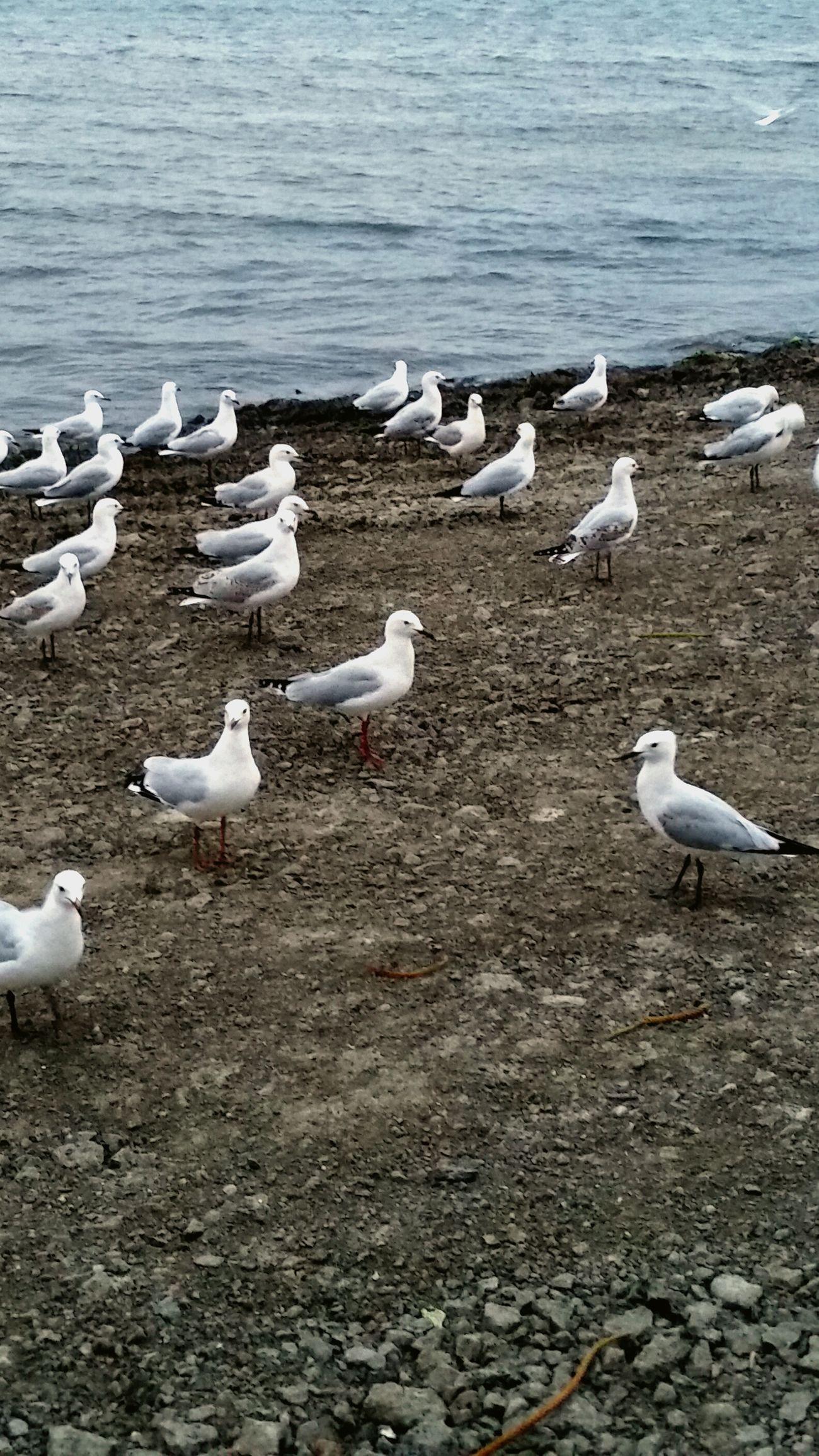 Beach Bums Well Fed Seagulls