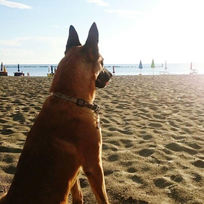 Holiday Italy Italia Martinsicuro Villa Rosa Beach Dog Sand Sea Sky Horizon Over Water Water