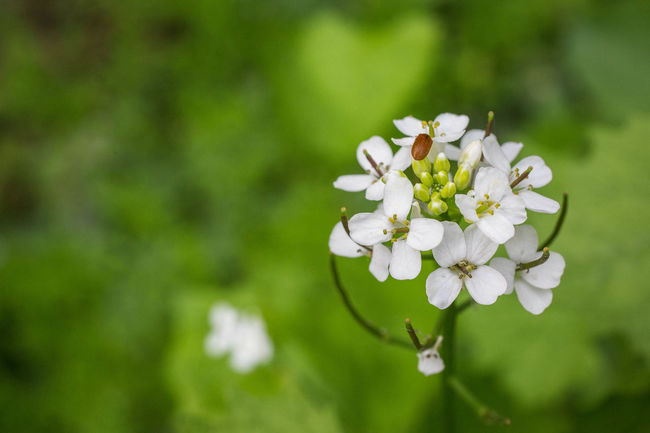 The life in details Beauty In Nature Blooming Blossom Botany Close-up Day Flower Flower Head Focus On Foreground Fragility Freshness Green Color Growth In Bloom Macro Nature No People Outdoors Petal Plant Pollen Selective Focus Stamen White White Color