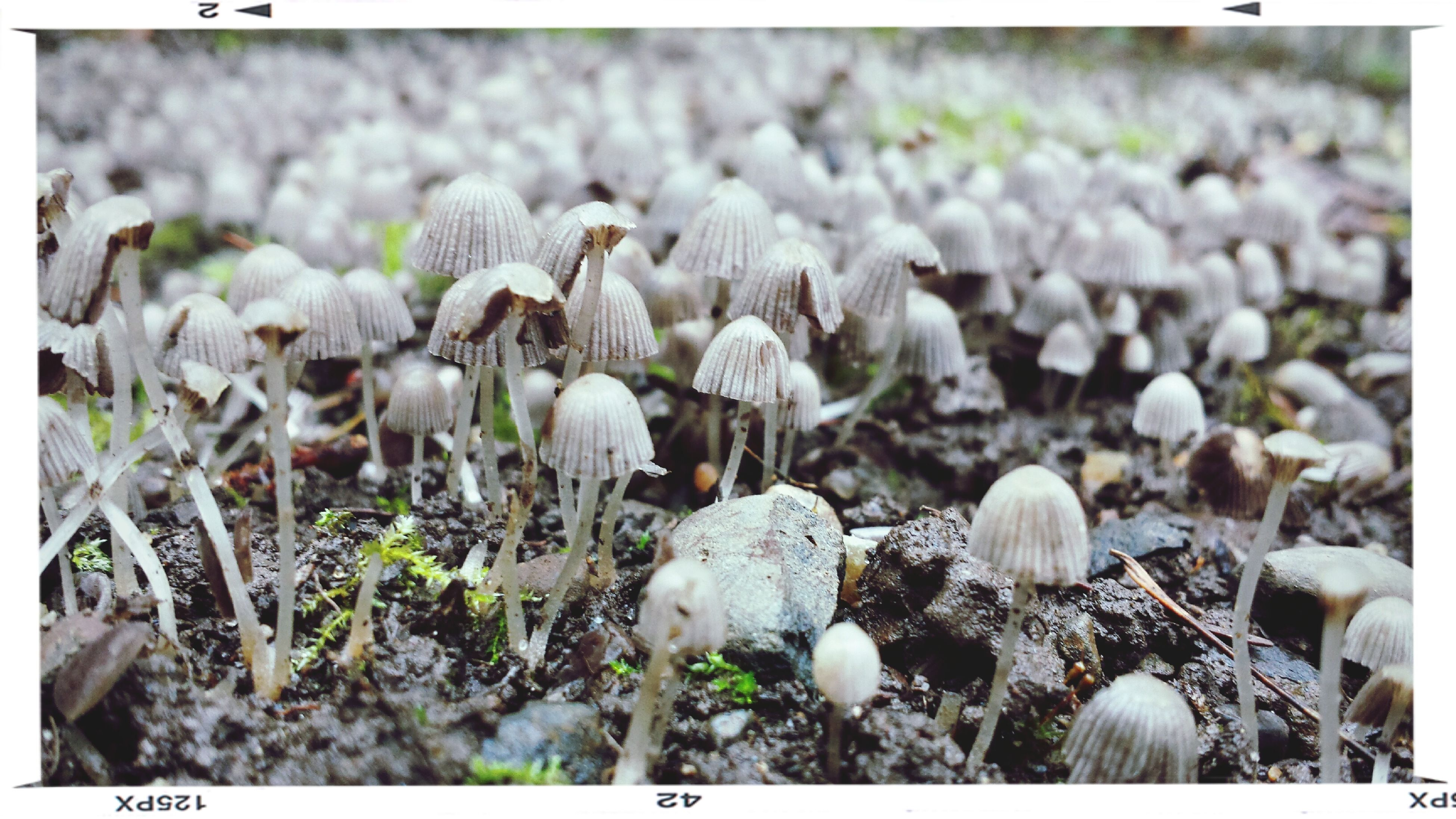 transfer print, auto post production filter, field, nature, growth, close-up, mushroom, focus on foreground, day, abundance, selective focus, plant, outdoors, grass, fungus, no people, beauty in nature, tranquility, dry, fragility