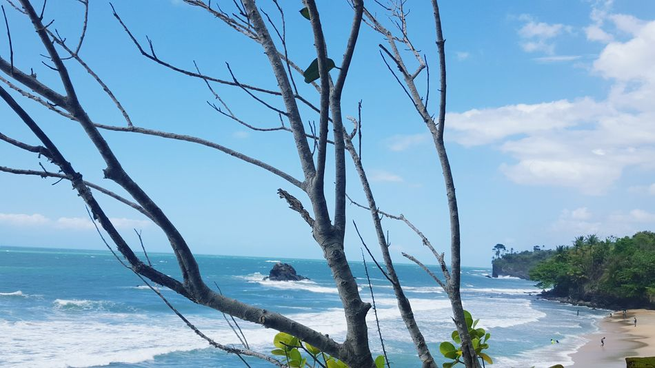 Sea Tree And Sky Clouds And Sky Windy Blue Skies High View White Wave Waves Sand Beach