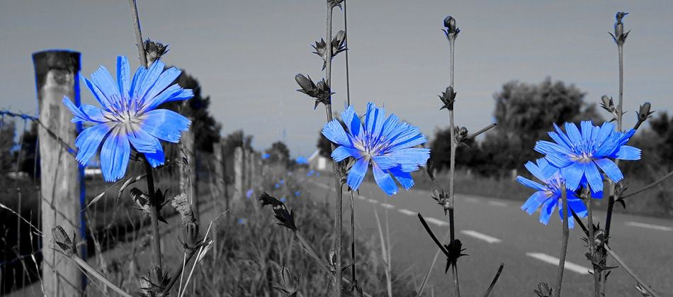 True Blue Chicory Color Palette Colour Of Life
