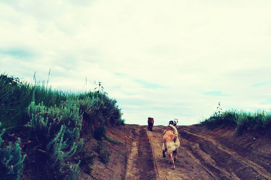 Hiking with beasts Dog Pets Sky Walking Cloud - Sky Outdoors Hike Beasts Labs Mutts Pibble Harleyboy