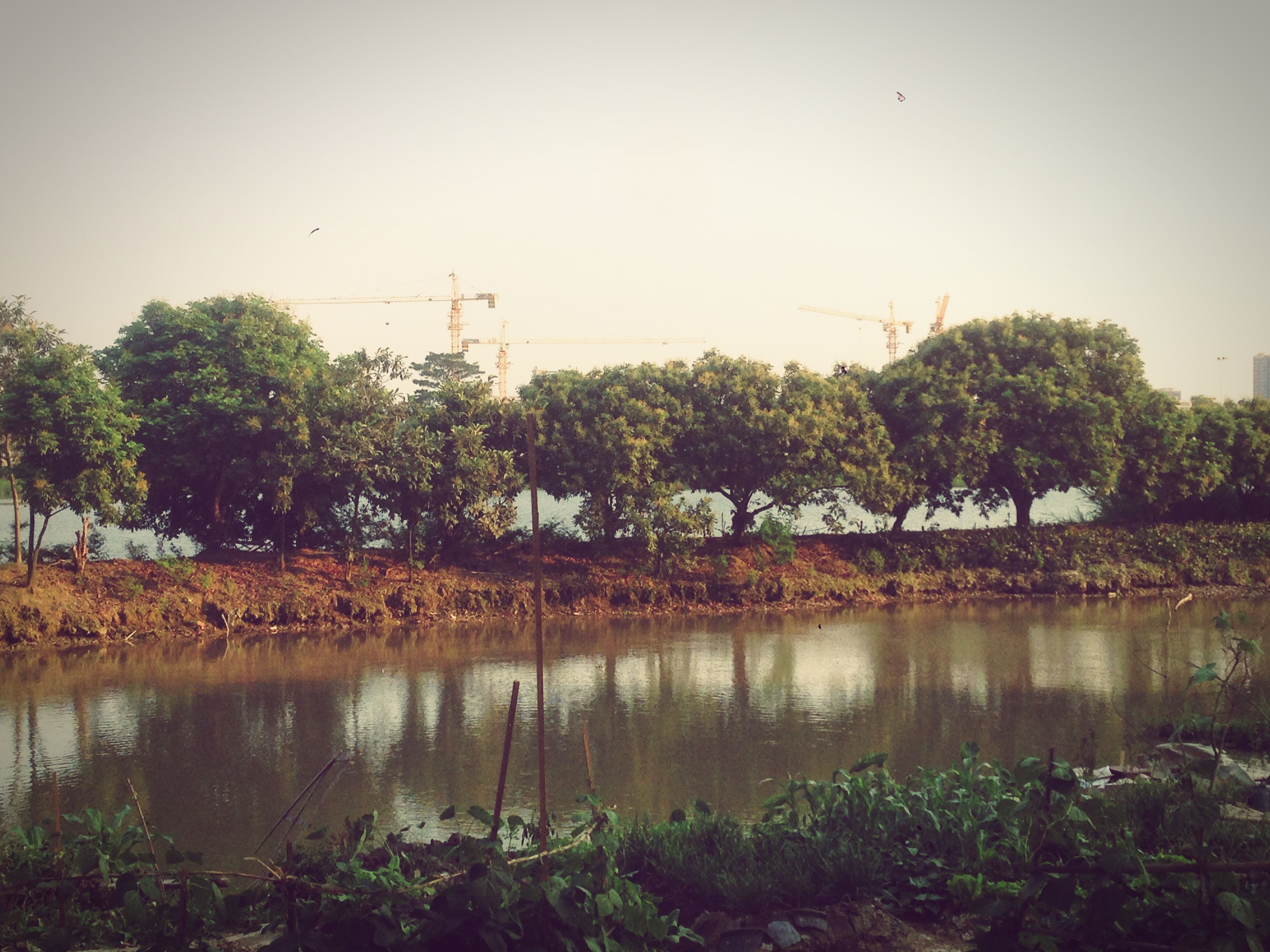 water, tree, clear sky, lake, reflection, tranquility, growth, tranquil scene, copy space, nature, bird, built structure, beauty in nature, plant, building exterior, scenics, river, architecture, sky, waterfront