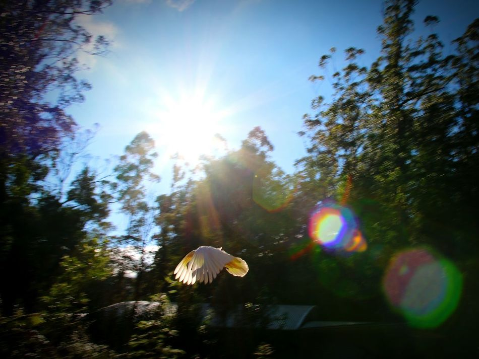 Bird Animal Flying Flying In Forest Trees And Sky Reflection Sunrise Sunlight Ray Sun Nature Street Photography Boken Light Landscape_Collection Capture The Moment Shadows & Lights Lines And Shapes EyeEm Best Shots Beautiful Taking Photos Peoplephotography Relaxing Bokeh Photography Parrot Landscape #Nature #photography