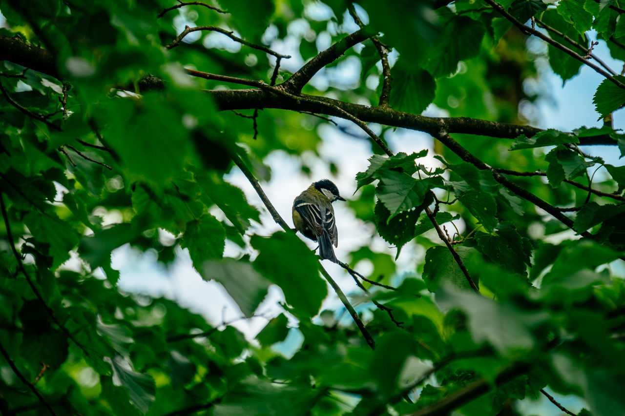 Animal Themes Animal Wildlife Animals In The Wild Beauty In Nature Bird Branch Day Green Color Growth Insect Leaf Mammal Nature No People One Animal Outdoors Perching Sparrow Tree Wildlife