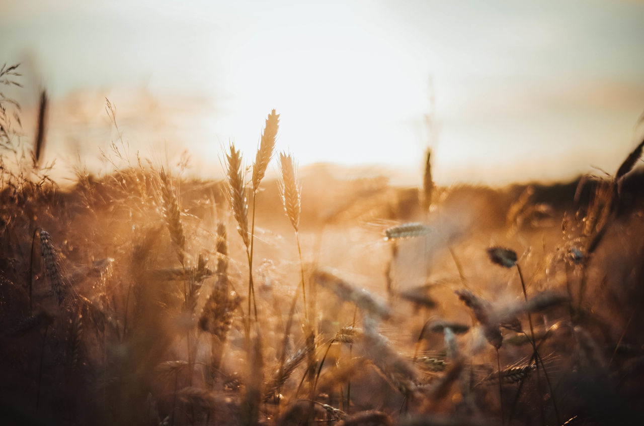 Light Nature Poland Sunlight Agriculture Beauty In Nature Beauty In Nature Day Field Freshness Good Morning Grass Growth Kaszuby Kaszuby Eyeem Landscape Nature Nature_collection No People Outdoors Plant Poland Eyeem Sky Sunrise Tranquility