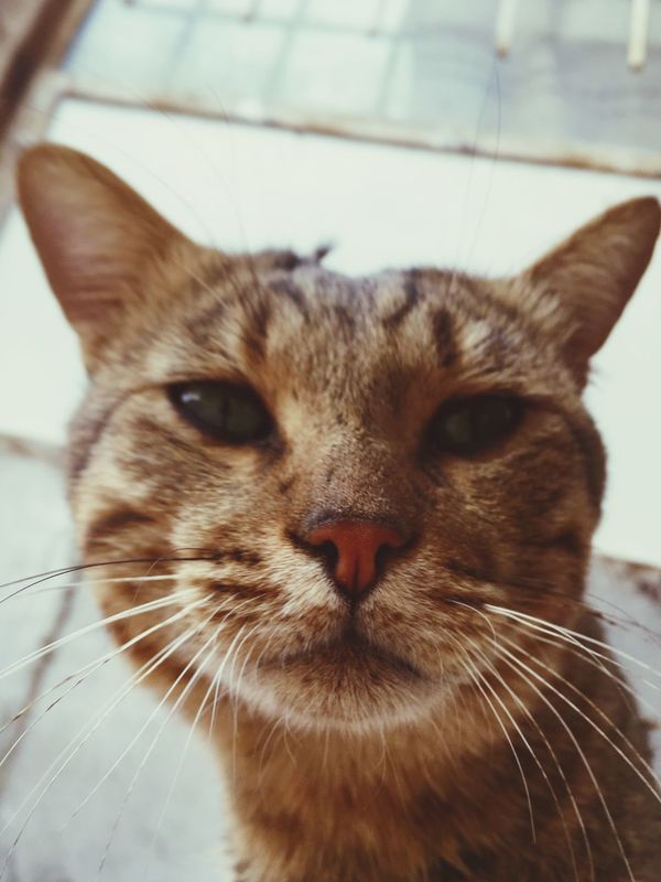 Maximum Closeness Domestic Cat One Animal Domestic Animals Pets Animal Themes Mammal Feline Close-up Cat Looking At Camera Indoors  Day Life ❤ Meow My Cat Cats Mm2 Wow_pics #picoftheday #photooftheday #fotodeldia #ig_masterpiece #clubsocial #statigram #catalunyafotos #ig #igers #freaksbcn #barcelona #catalunya #bcn #irbarcelona #mytravelgram #pics_united #gang_family #igersbarcelona #igerscatalonia #gf_daily #desco