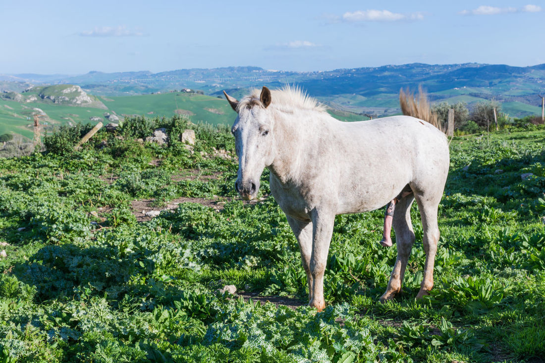 Horse Cart Horse Life Horses Animal Themes Beauty In Nature Domestic Animals Erechtheion Field Grass Green Color Growth Horse Horse Photography  Horse Racing Horse Riding Horsedrawn Livestock Mammal Mountain Nature One Animal Outdoors Plant Sky Standing