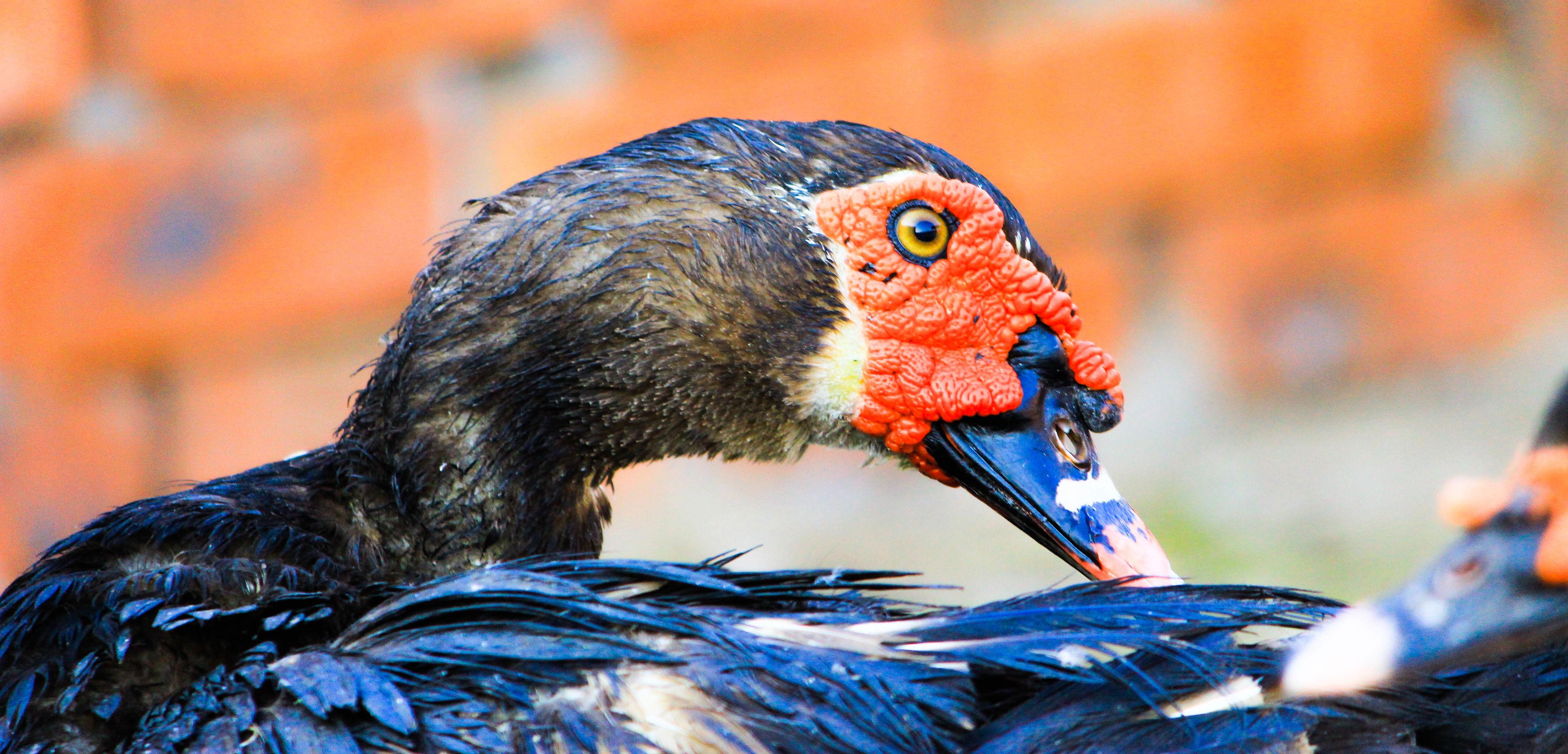 bird, animal themes, beak, one animal, animals in the wild, close-up, focus on foreground, animal wildlife, outdoors, day, no people