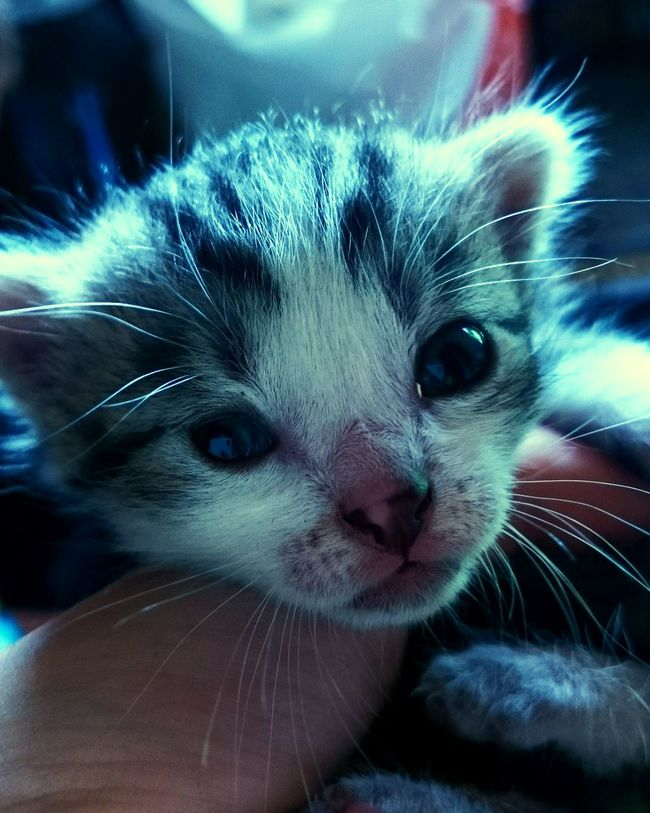 Cat Cat♡ Enjoying Life