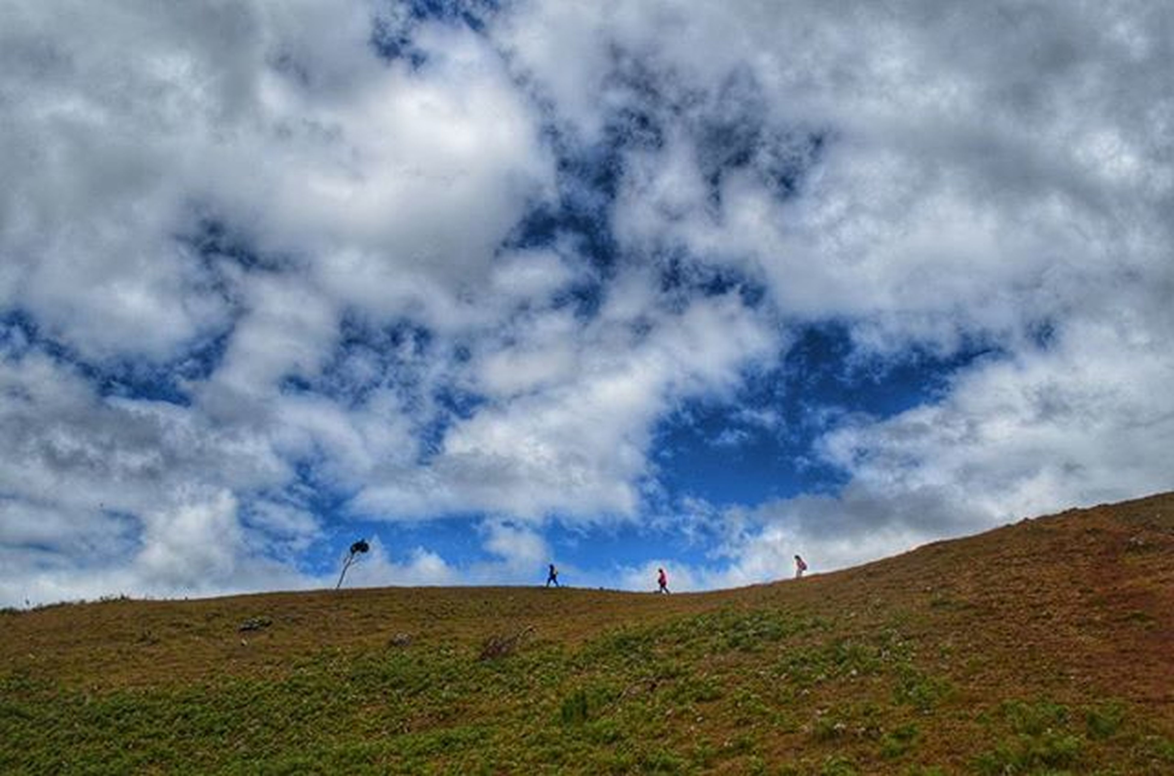 sky, cloud - sky, cloudy, grass, landscape, animal themes, tranquility, tranquil scene, field, scenics, nature, cloud, beauty in nature, grassy, day, one animal, non-urban scene, low angle view, weather, hill