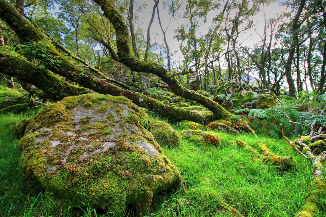 EyeEm Nature Lover EyeEm Gallery EyeEmNewHere Wales UK Ancient Woodland Beauty In Nature Forest Grass Growth Moss Nature Tree