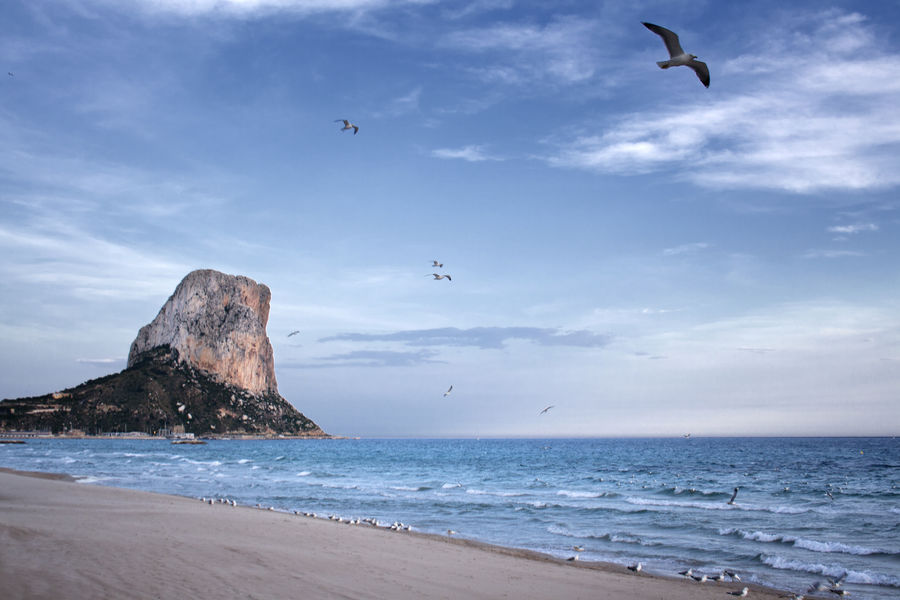 Alicante Beach Beauty In Nature Bird Calpe Day Flying Horizon Over Water Nature No People Outdoors Peñón De Ifach Sea Seagulls And Sea Sky SPAIN Tourist Destination Water