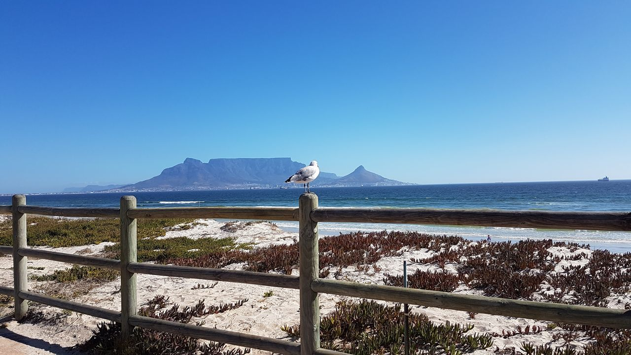 South Africa 🇿🇦 Cape Town, South Africa God's Glory On Display  Cape Town Beauty Seagull Posing Looking Around
