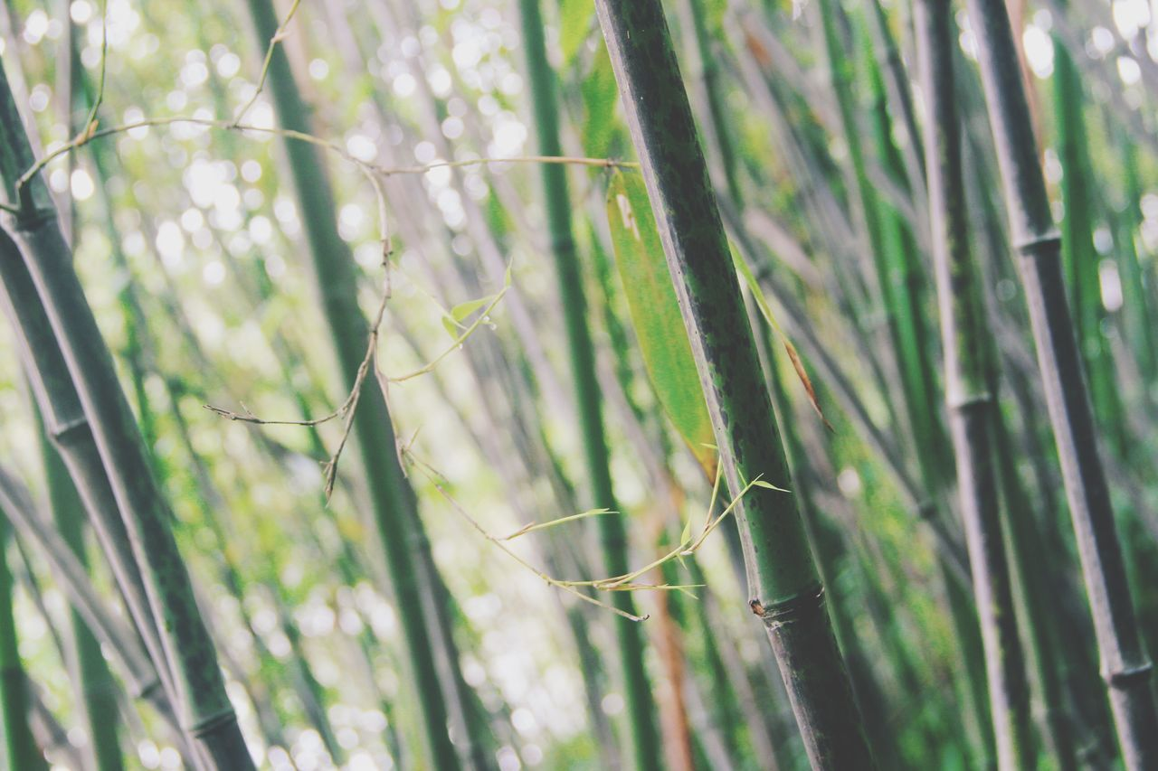 growth, nature, day, outdoors, no people, plant, beauty in nature, tranquility, green color, grass, close-up, fragility, tree, freshness