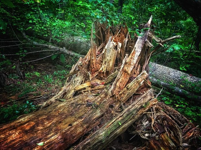 Tree Trunk Tree Wood - Material Log Deforestation Forest Tree Stump Outdoors Nature Environmental Issues