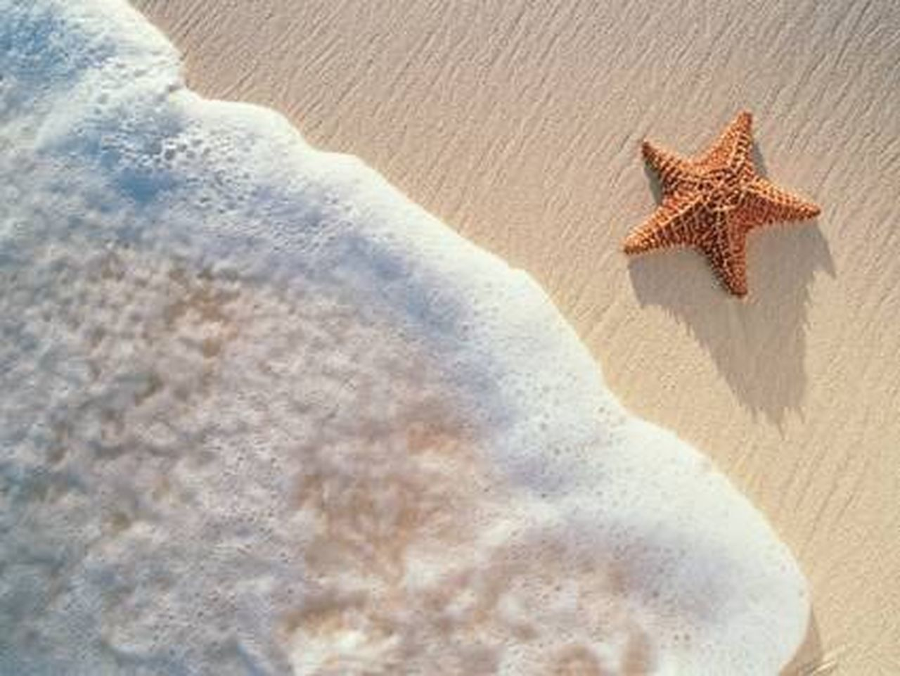 sand, starfish, beach, sunlight, sea life, no people, vacations, day, nature, sea, indoors, beauty in nature