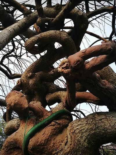 Tree Human Body Part Abstract Beauty In Nature Albero In Alghero