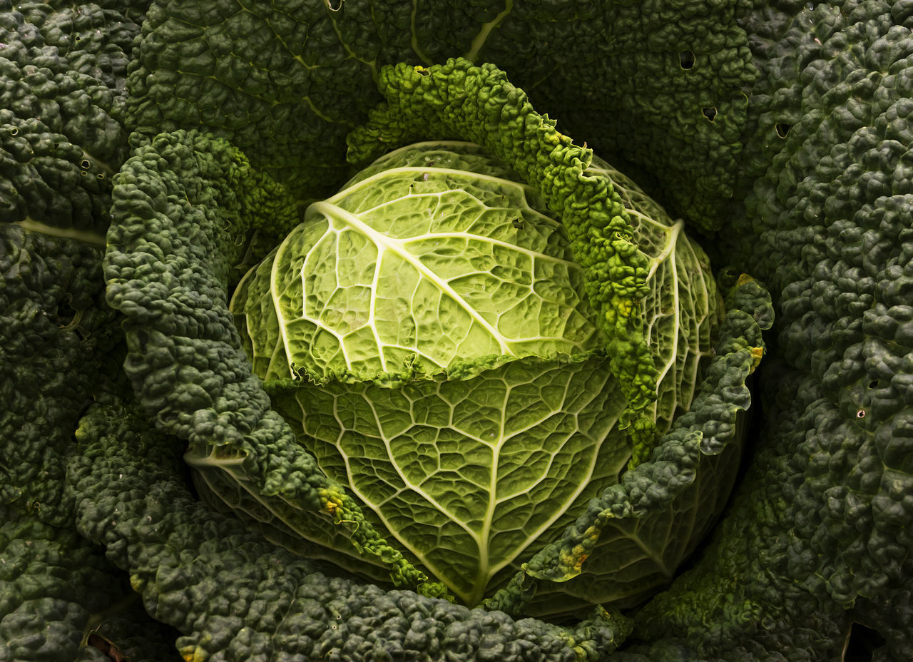 cabbage close-up Farm food garden no people outdoors vegetables