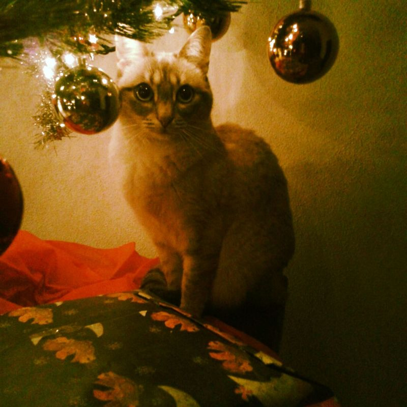 Details Of My Life Cat My Love Cat Lovers Cat♡ Cats Of EyeEm Cat Eyes Eyes Marry Christmas Marry X'mas
