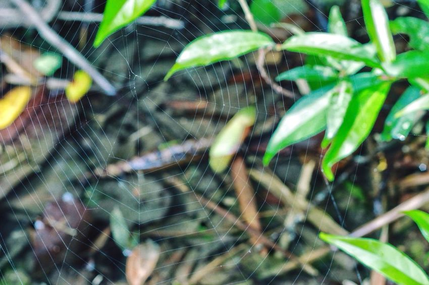 EyeEmNewHere Spider Web Nature Spider Close-up No People Beauty In Nature Nature