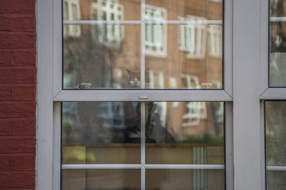 Lonely Cat Animal Building Exterior Cat Cats Cats Of EyeEm City Life Close-up Day Daylight Glass - Material Hidden London Looking Through Window No People Outdoors Reflection Sliding Door Southwark  Streetphotography Window Window Frame Long Goodbye