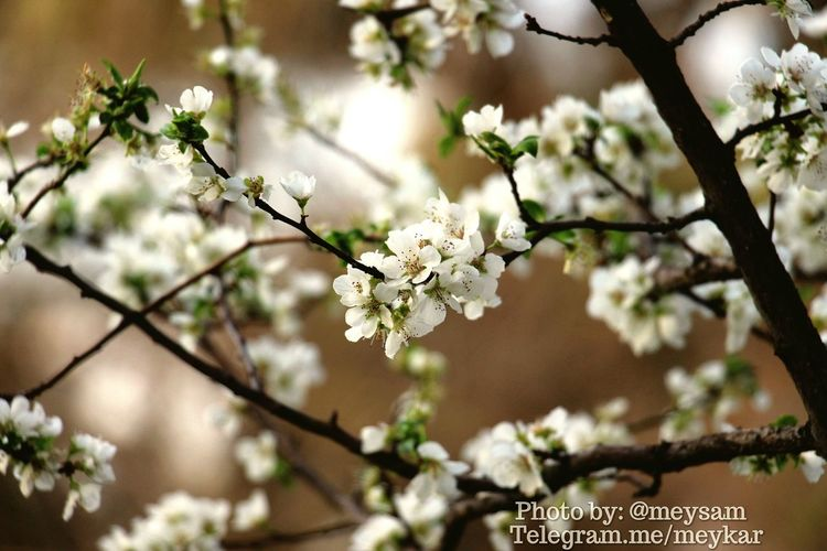 Spring flowers First Eyeem Photo