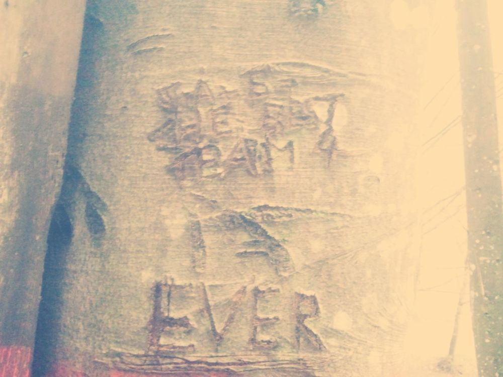 S + A + E = Best Team 4 Ever Old Tree Love Best Team Ever