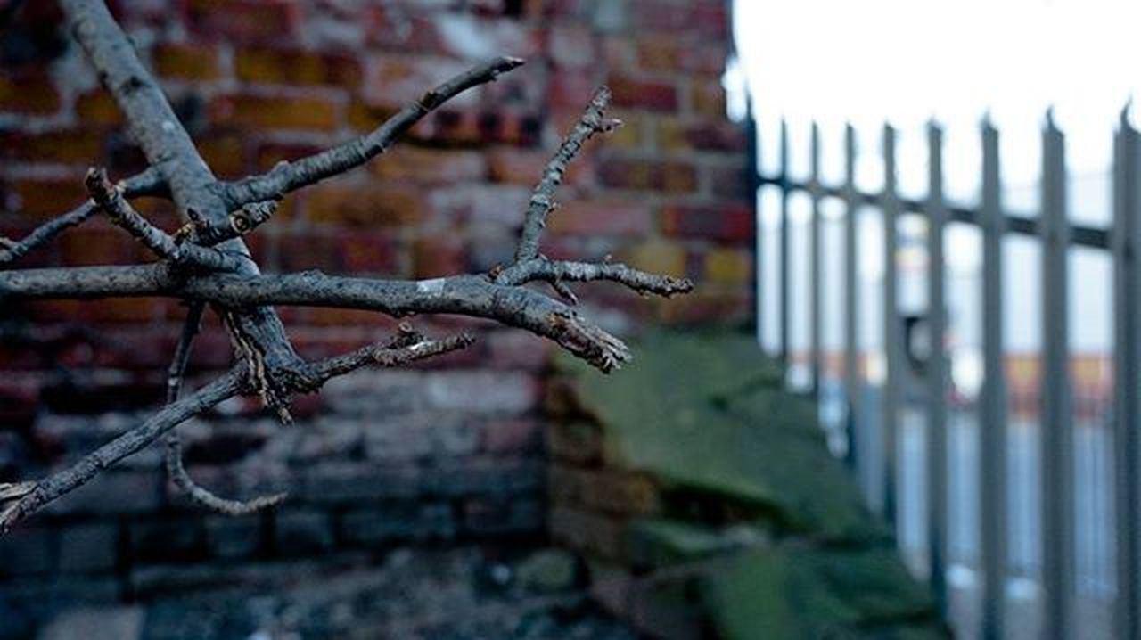 1/3 __________________________ Photography Darkness Tree Macro Photographer Adobe AdobeLightroom Lightroom Fieldofdepth UrbanART Media Metal Grim Reality Brick Sony A7s SonyA5000 Sonyphotography SonyA7s