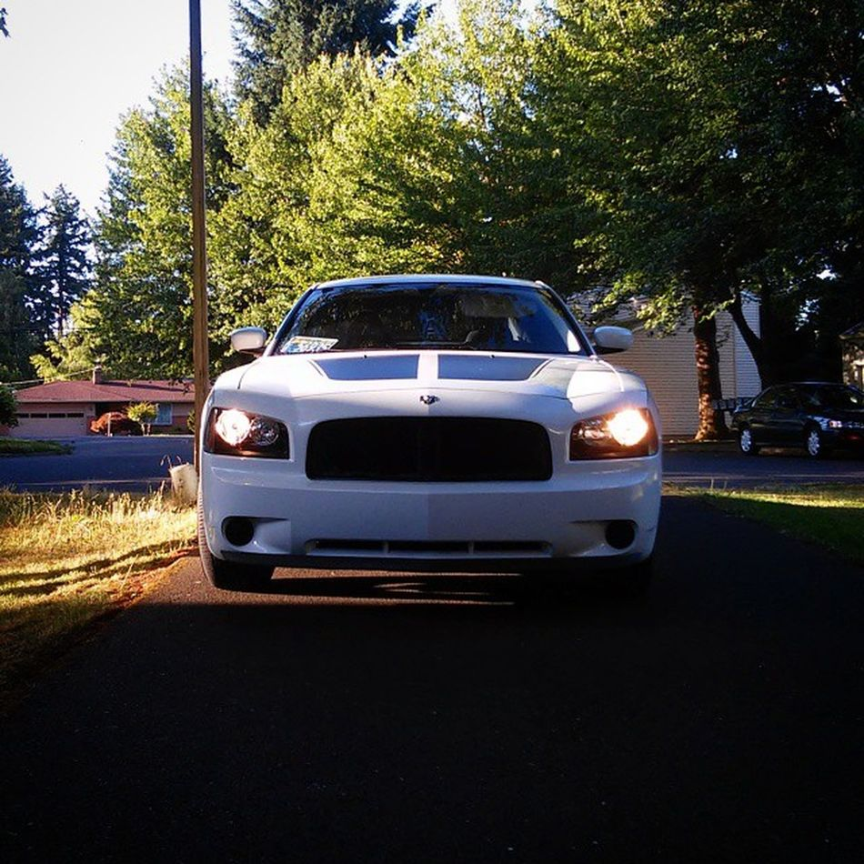 I just couldn't resist taking the picture... Dodgecharger Beauty Nature