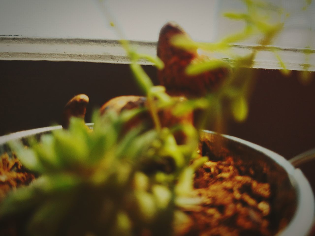 indoors, selective focus, one person, plant, growth, real people, food, freshness, day, close-up, healthy eating, nature, people
