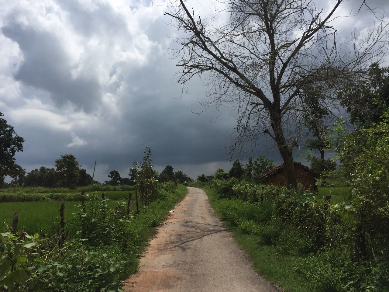 Solitude Road Not Taken Outskirts India Villages After The Rain Scenery Shots Greenery Finding New Frontiers