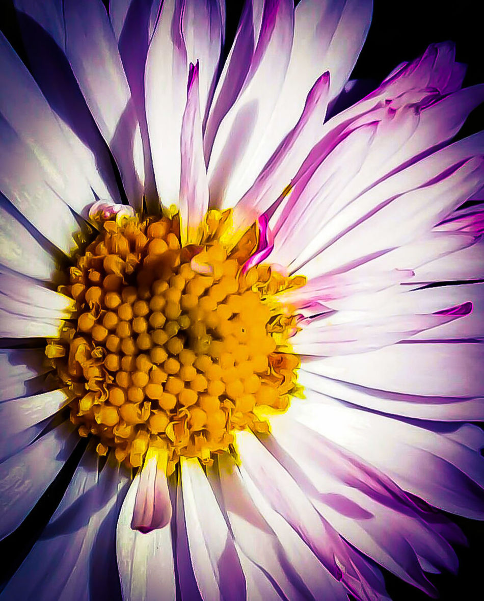 Spring time flower by elvio Vintage Style EyeEmBestPics National Geographic Eye Em Nature Lover Beauty In Nature Art Is Everywhere EyeEm Diversity EyeEmNewHere Fine Arts Photography Eyem Best Shots Nature_collection Yogainspiration Break The Mold Wallpaper Design Outdoors Magazine Cover Design