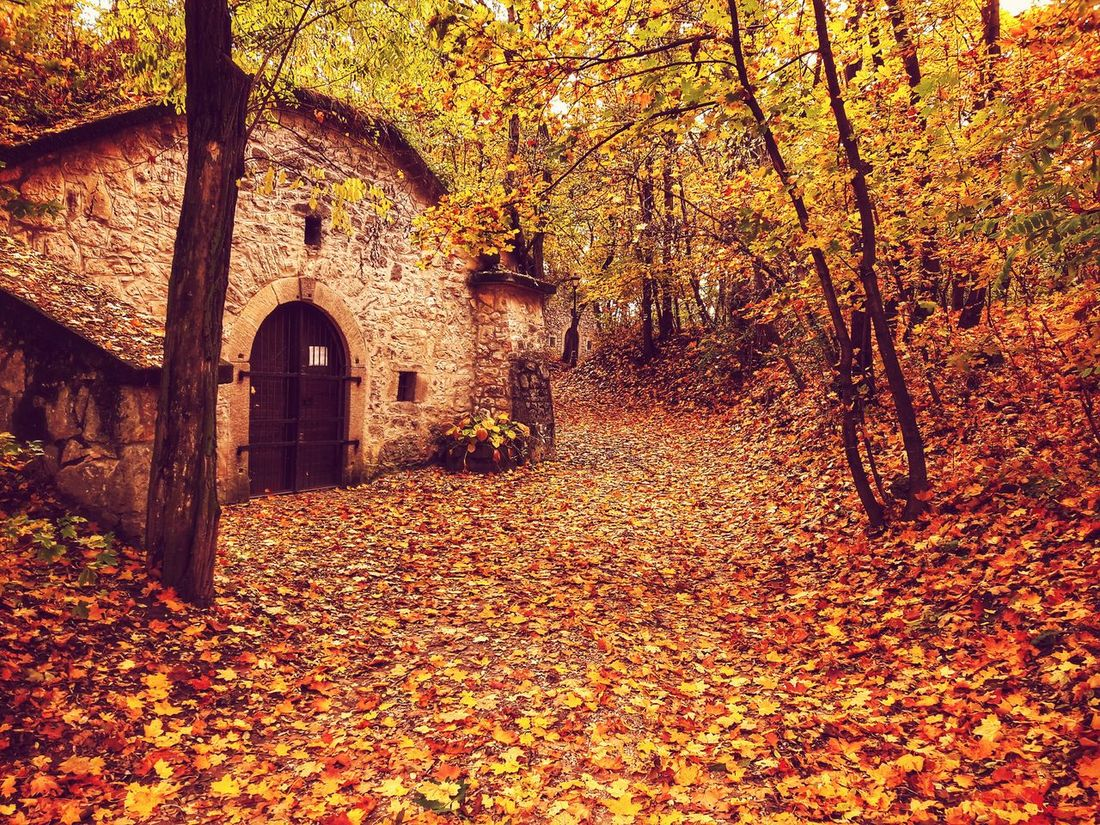 Nature Arch Architecture Tree Fall Fall Leaves Autumn Leaf Carpet First Eyeem Photo