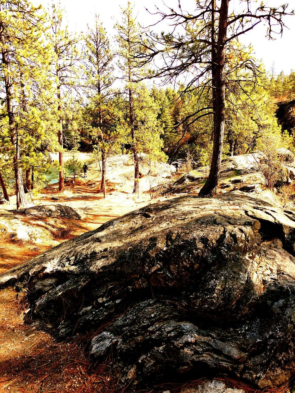Solid Rock? Tree Forest Tree Trunk Tranquil Scene Tranquility Non-urban Scene Scenics Nature WoodLand Growth Solitude Water Stream Branch Beauty In Nature Travel Destinations Tourism Day Wilderness Narrow