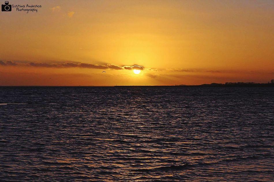 Seaside Rise And Shine Sunrise_Collection Fantastic Landscape Brøndby Strand Denmark 🇩🇰🇩🇰🇩🇰