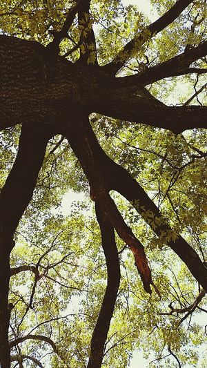 Nature trees my favorite