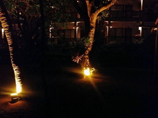 Lantern in the garden. Laluz Showcase March Laiyabatangas Beachlife Nightbeach