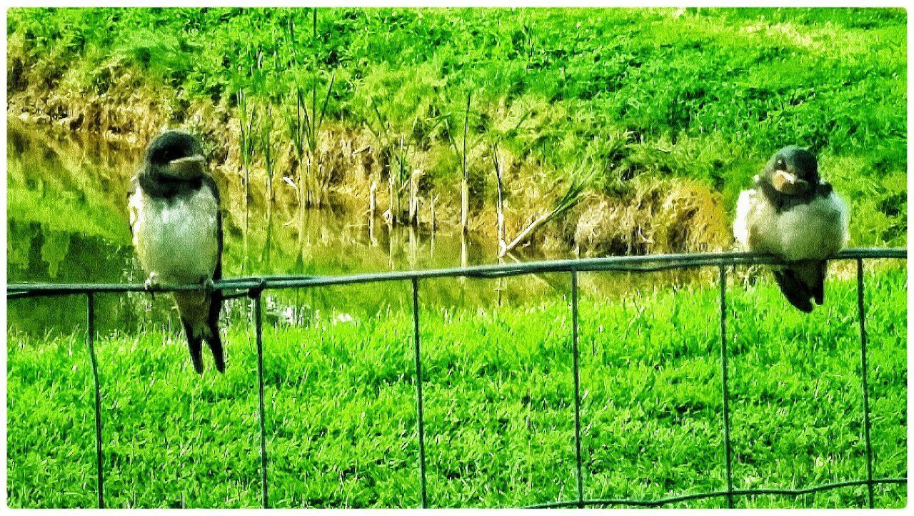 Grass Green Color Field Bird Nature Outdoors Day
