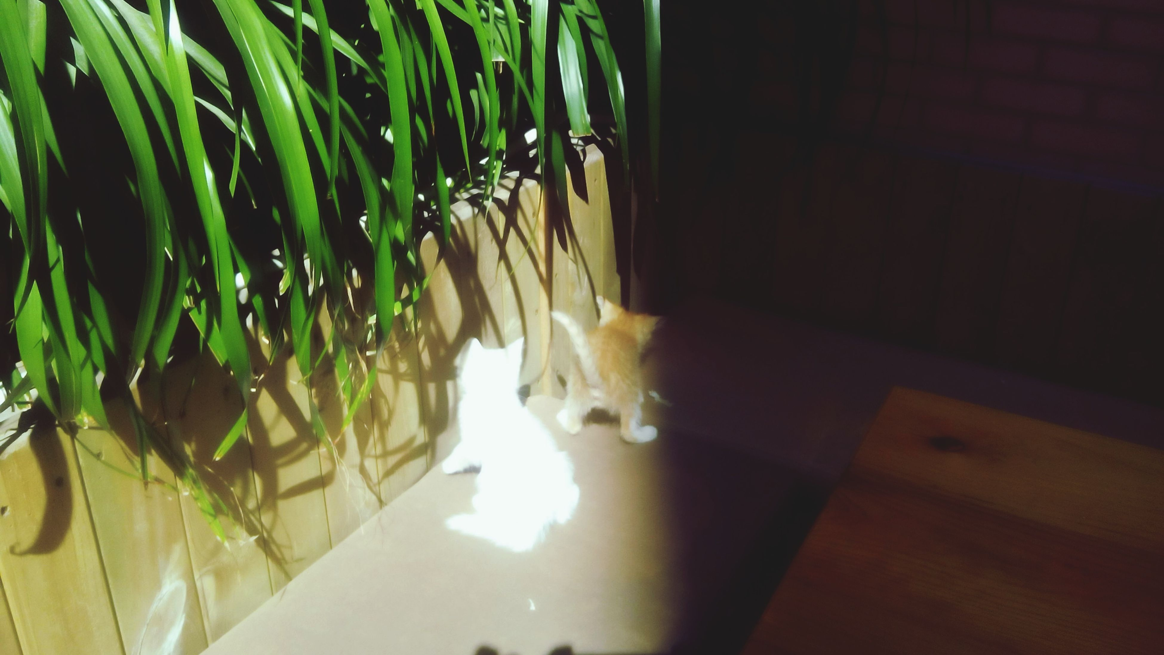 animal themes, indoors, domestic cat, cat, one animal, pets, domestic animals, sunlight, built structure, house, architecture, illuminated, wall - building feature, shadow, no people, plant, home interior, high angle view, feline, potted plant