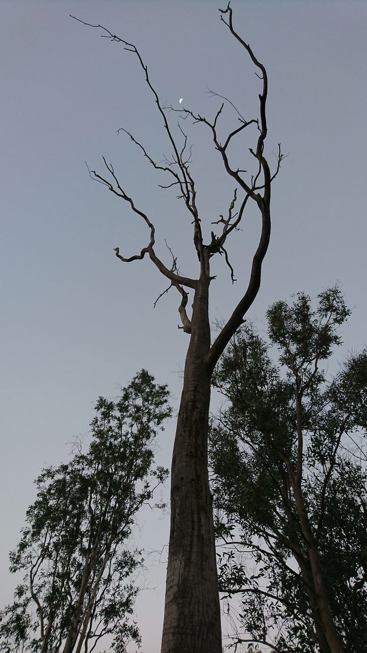 tree, tree trunk, branch, low angle view, nature, bare tree, clear sky, growth, no people, tranquility, day, beauty in nature, outdoors, sky, landscape, lone, scenics, dead tree