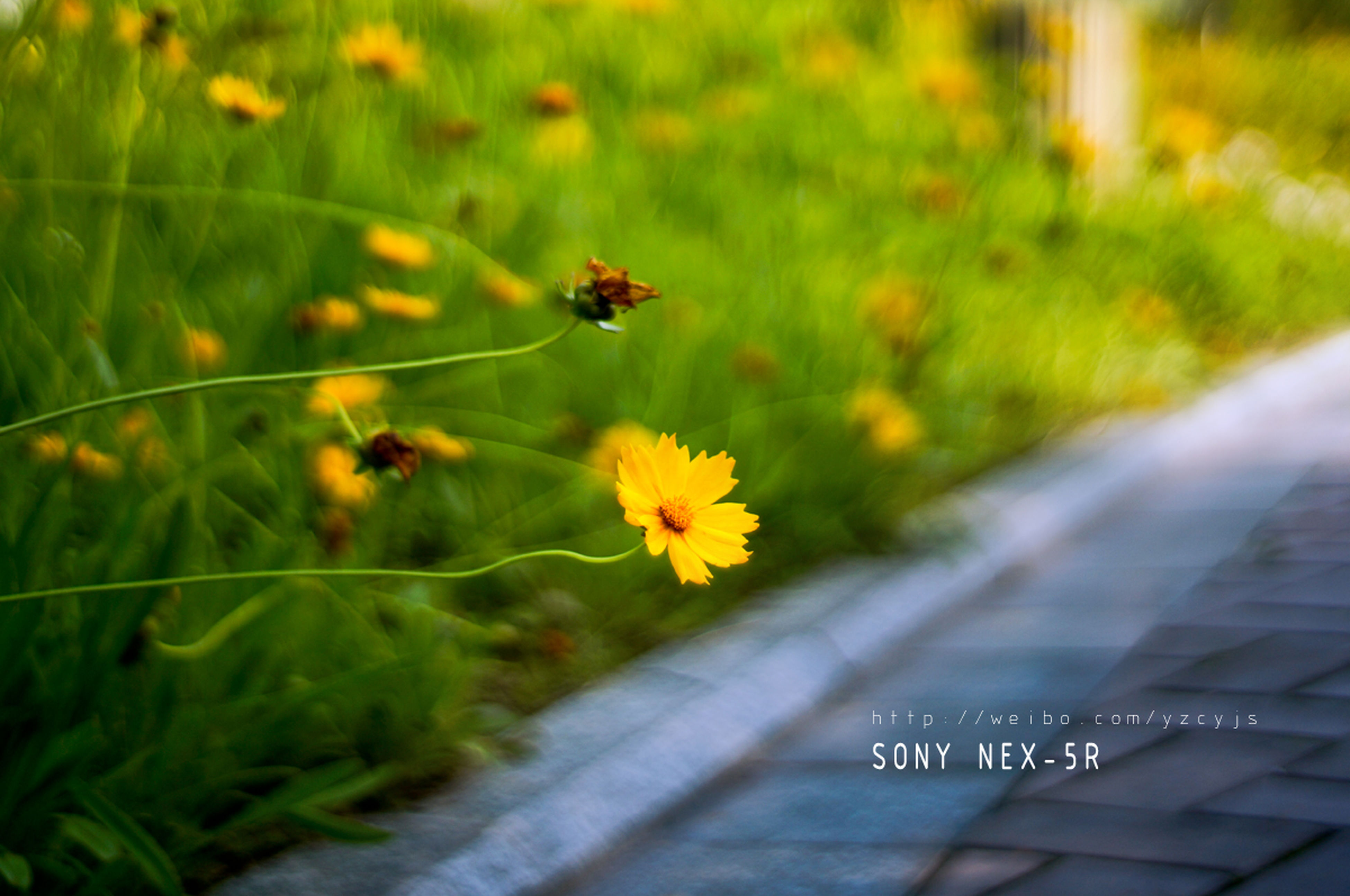 flower, insect, growth, fragility, yellow, freshness, plant, beauty in nature, nature, petal, one animal, animal themes, transportation, focus on foreground, green color, close-up, animals in the wild, wildlife, flower head, selective focus