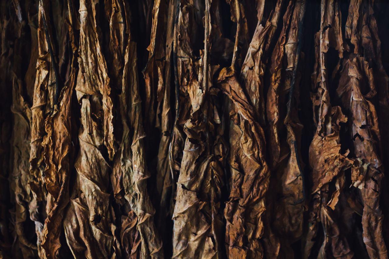 Backgrounds Cigar Cigarrette Close-up Cuban Cigar Full Frame Nicotine No People Smoke Textured  Tobacco Tobacco Leaf Tobacco Plantation