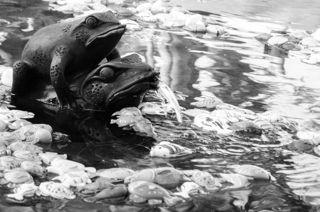 We love mating, even a sclupture, Lembangtahususu D5100 Oct2015