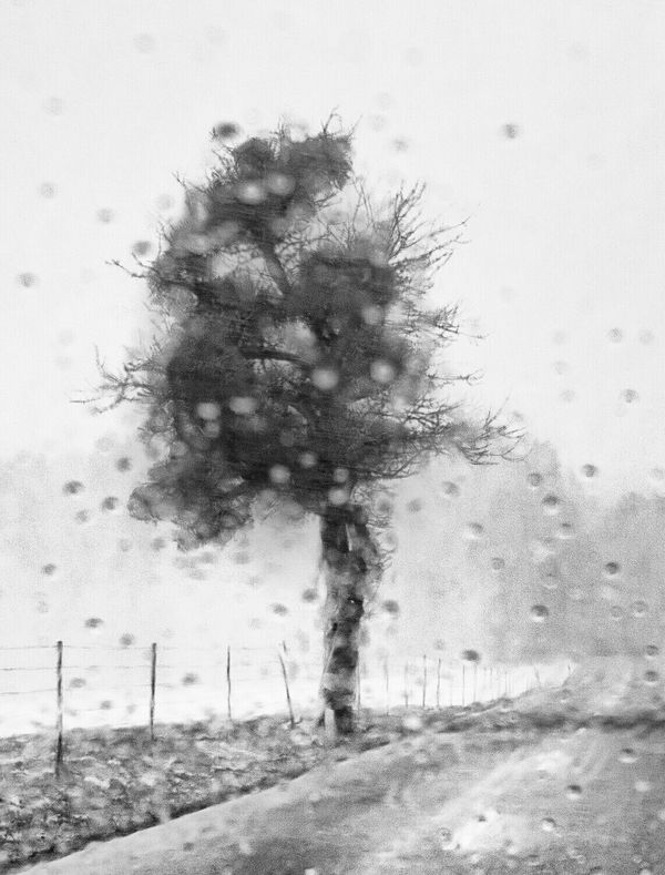 Nature Tree Outdoors Rain Melancholic Landscape Melancholy Black And White Blurred Visions Blurred Photos. Grey Color Tree Single Tree Sadness