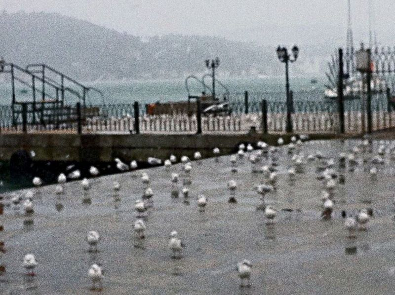 Istanbul Turkey Pigeons Popular Photos Week Of Eyeem OurColorfulPlanet EyeEm Check This Out Our Best Pics EyeEm Gallery Eyemphotography Watching Wandering Around Bosphorus, Istanbul Gloomy Day Raining Urban Landscape