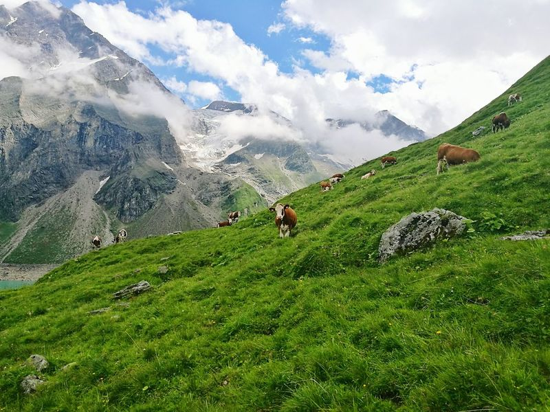 Green Color Landscape Mountain Nature Cloud - Sky Mountain Range Beauty In Nature Domestic Animals Agriculture Bestplace Austria Mountains Austria Austrian Alps No People Beauty In Nature Cow Cows Lost In The Landscape